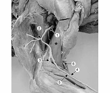 Применение в в травматологии, ортопедии, неврологии